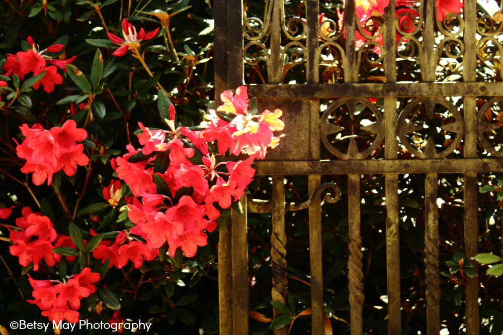 flowers and gate