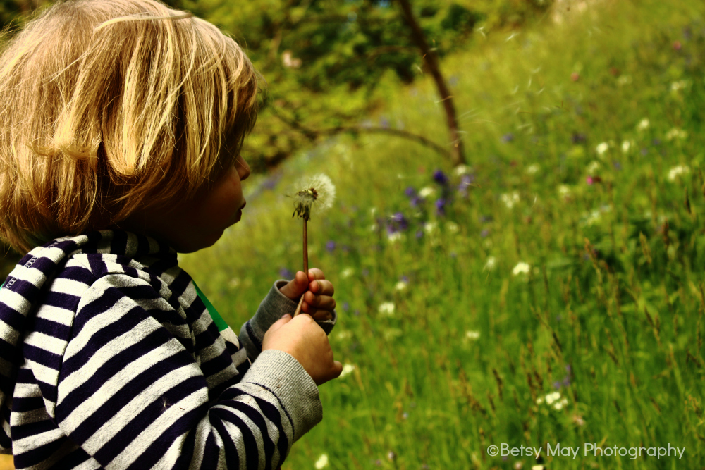 young boy with dandilion